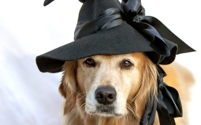 Hanna, The Very Best Witch